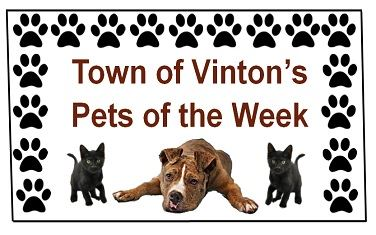pets of the week jpeg for spotlight REVISED