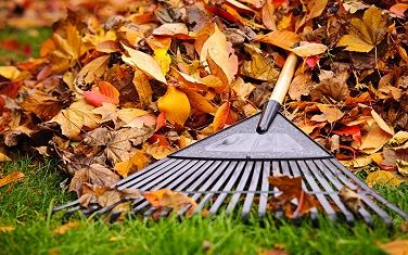 Image of Fall Leaves with a Rake